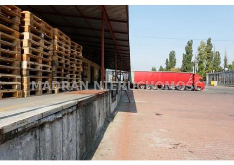 Magazyn do wynajęcia - Teofilów, Bałuty, Łódź, Łódź M., 330 m², 3630 PLN, NET-MDR-HW-192
