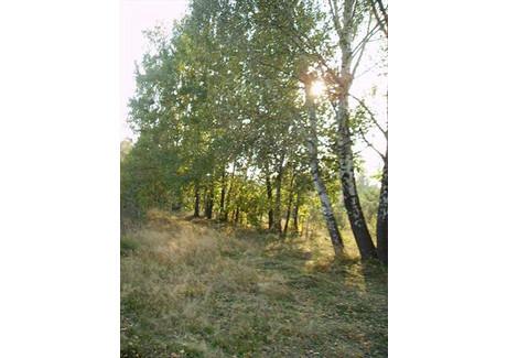 Działka na sprzedaż - Czeczotki, Czosnów, Nowodworski, 5600 m², 420 000 PLN, NET-50191