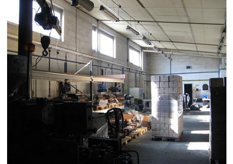 Komercyjne do wynajęcia - Centrum, Sulechów, Zielonogórski, 250 m², 5000 PLN, NET-PAW-RE53-798-39023