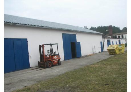 Magazyn do wynajęcia - Gorzów Wielkopolski, 800 m², 6700 PLN, NET-40/1850/OOW