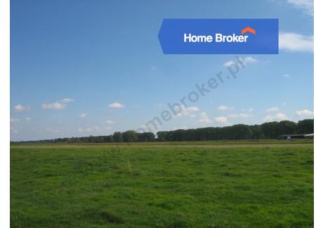 Działka na sprzedaż - wielkopolskie, 89 100 m², 449 500 PLN, NET-241482