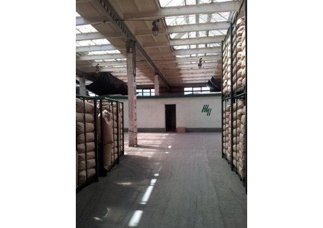 Hala na sprzedaż - Jarocin, Jarociński (pow.), 6229 m², 4 540 000 PLN, NET-46