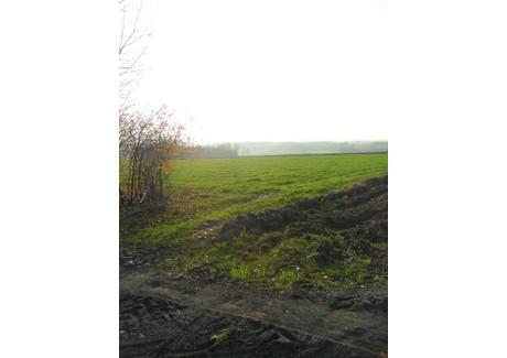 Działka do wynajęcia - Beleń, Zapolice, Zduńskowolski, 60 000 m², 12 000 PLN, NET-KWK-GW-810-1