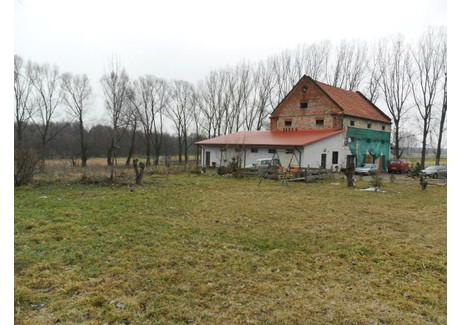 Dom na sprzedaż - Niewiesz, Kolonia, Poddębice, Poddębicki, 480 m², 440 000 PLN, NET-KWK-DS-1018-1