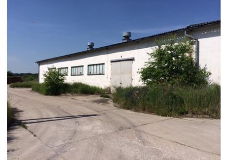 Hala na sprzedaż - Niemodlin, Opolski, 2900 m², 5 000 000 PLN, NET-788