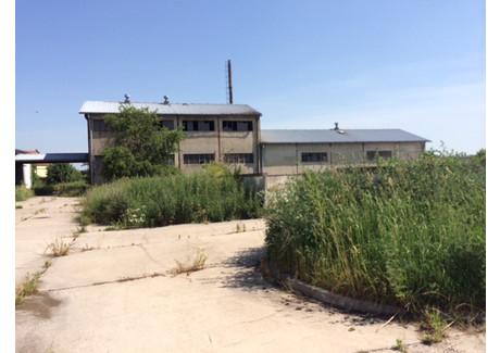 Hala do wynajęcia - Niemodlin, Opolski, 2900 m², 17 400 PLN, NET-587