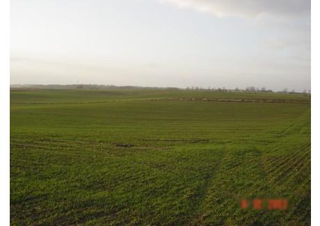 Działka na sprzedaż - Siadło Górne, Kołbaskowo, Policki, 3000 m², 96 000 PLN, NET-SCNS1160