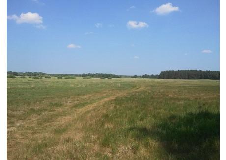 Działka na sprzedaż - Komarowo, Goleniów, Goleniowski, 10 011 m², 50 000 PLN, NET-SCN20298