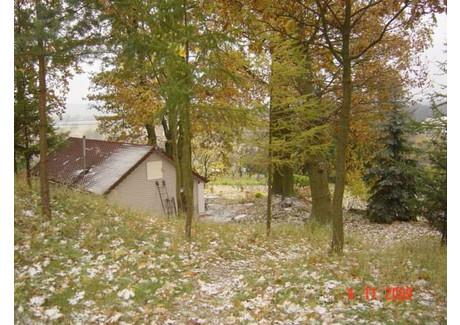 Działka na sprzedaż - Radziszewo, Gryfino, Gryfiński, 3518 m², 738 000 PLN, NET-SCNS1738