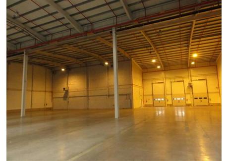 Komercyjne do wynajęcia - Szczecin, 3600 m², 60 840 PLN, NET-SCN20578