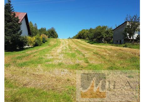 Działka na sprzedaż - Czułów, Liszki (gm.), Krakowski (pow.), 8500 m², 389 000 PLN, NET-470MS1