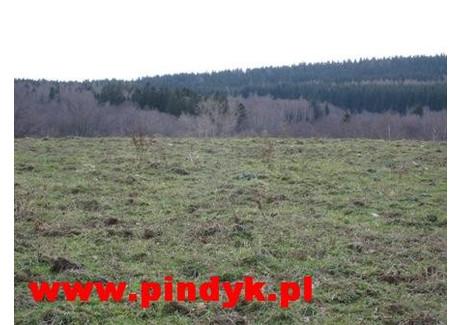 Działka na sprzedaż - Kopaniec, Stara Kamienica, Jeleniogórski, 63 000 m², 945 000 PLN, NET-PIN17722